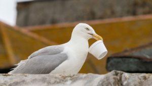 drunk seagulls